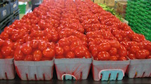 Bishop tomatoes