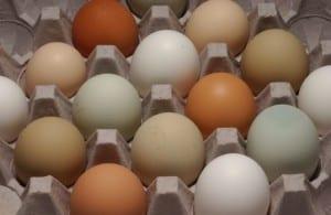 Iowa Extension eggs