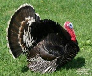 eXtension turkey
