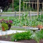 Fairfield County Master Gardener Projects