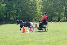driving mini horse at Fairfield horse show