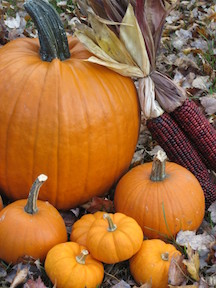 pumpkins-Pettinelli-768x1024