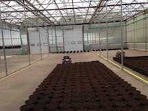 robots in CK Greenhouse