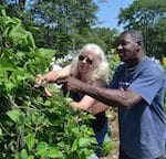 Apply to Become a UConn Extension Master Gardener