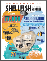 shellfish infographic