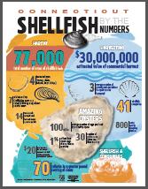 shellfish infographic