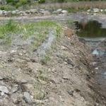 Living Shoreline Planting
