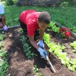 Tools for Healthy Living Receives National 4-H Award