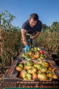 veteran harvesting vegetables