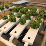 Hydroponics at UConn Extension
