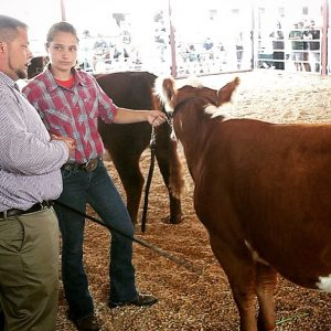 Laura Irwin showing a Hereford beef animal at a fair