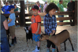 4-H explorers showing goats at county 4-H fair