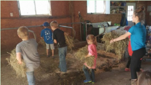 4-H explorer members working in barn carrying hay