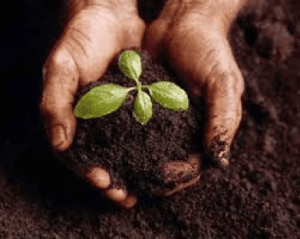 plant in hand and soil