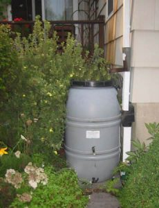 rain barrel against side of house in with shrubs