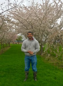 Shuresh in apple orchard