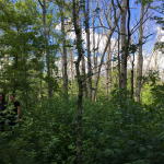 The Slow Storm: Tree Mortality in CT from Invasive Insect Pests