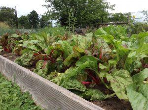 raised bed in foodshare garden