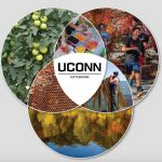 Job Openings with UConn Extension