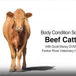 Livestock BCS Video Series
