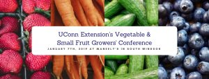 vegetable conference banner photo