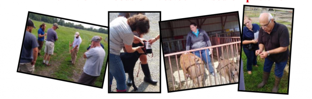 collage of people and livestock
