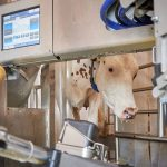 Risk Management Technology: Robotic Milking Machine