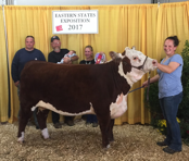 Katie Adkins as a UConn 4-H member showing a Hereford at the Big E
