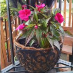 10 Tips for the July Gardener