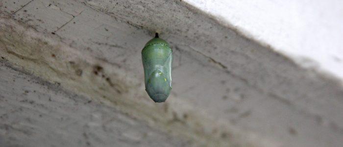 Caterpillar cancun