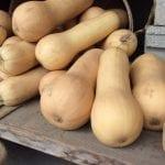 10 Tips for the October Gardener