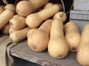butternut squash stacked on a table at a farm stand in Connecticut