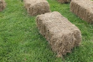 hay bales on green grass