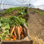 Vegetable Production Certificate Course
