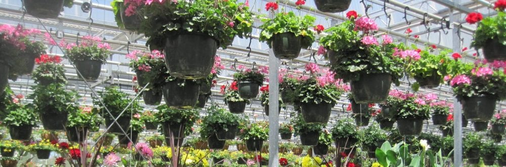 hanging baskets in the Garden at Woodbury - Leanne Pundt photo