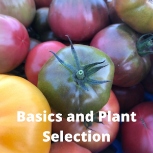 multi-colored tomatoes with the words basics and plant selection written on the photo