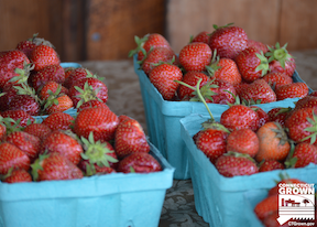 fresh Connecticut grown strawberries in containers at a farm stand