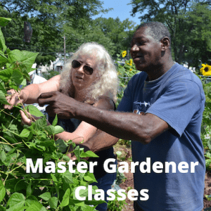 woman and man working in a garden with words master gardener classes written on it