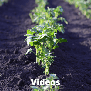 vegetable plants growing in soil with the word videos on the photo