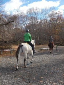 two horses headed out onto the trails with their equestrian riders at Bluff Point State Park in Groton